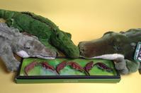 ワニ・チョコ - 我が家のヌイグルミ・コレクション