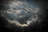 日曜の目覚め - ナンちゃんの天然色写真&白黒写真