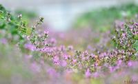 春の足音 - 旅のかほり
