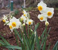 春の訪れ - 神戸布引ハーブ園 ハーブガイド ハーブ花ごよみ