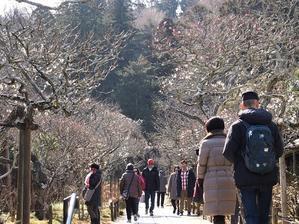 2月の自然観察会は北鎌倉の禅寺へ(2019.02.18) - フランス語と、鎌倉と、私と。。。