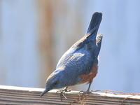 硝子越し - TACOSの野鳥日記