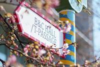 開花が進む天王洲の河津桜 - 柳に雪折れなし!Ⅱ