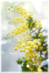 Mimosa - おだやかに たのしく Que Sera Sera