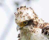 突然の出合い - 趣味の野鳥撮影