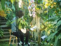 牧野植物園蘭展でコンサート♫ - アリスのトリップ