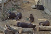 カワウソイレブン - 動物園へ行こう