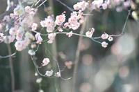 春の大船へ【1】 - 写真の記憶