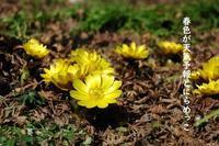春色が天気予報とにらめっこ - どんぐりしおり