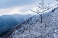 野迫川樹氷 - toshi の ならはまほろば
