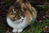 某所の猫 - WEEKEND EXTENDED LIFE-STYLE