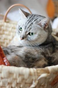 100均でかごベッドの補修。 - Living with Cats*