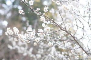 春を感じて -
