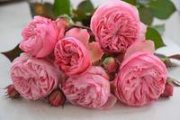 剪定とともに - 元木はるみのバラとハーブのある暮らし・Salon de Roses