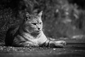 Devoting Care To Stray Cats - SILENT SOLILOQUY