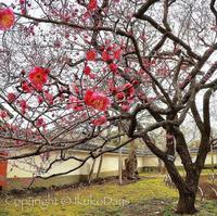 〈週末trip〉茨城歴史漫遊 。江戸時代最大の総合大学:『講道館』水戸 - IkukoDays
