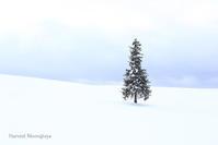 Chritmas Tree - Harvest Moon