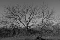 河原の樹木 - 空を見上げて