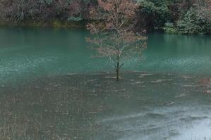 池の立木 -
