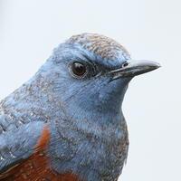 午前の訪問者 - TACOSの野鳥日記