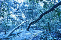 第4候土脈潤い起こる - Wind Tribe Story
