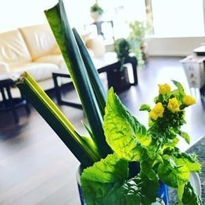 菜の花、特価。 - = WE'RE HERE !=  since 2005
