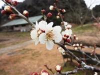 ウメの香り、雨のにおい - 千葉県いすみ環境と文化のさとセンター