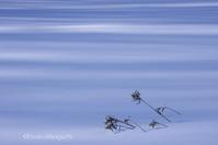青いストライプ - ekkoの --- four seasons --- 北海道