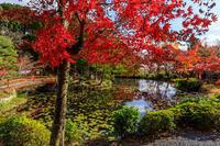 京の紅葉2018彩りの参道・大原野神社 - 花景色-K.W.C. PhotoBlog