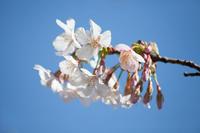 春の大船へ【3】 - 写真の記憶