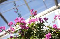 春の大船へ【2】 - 写真の記憶