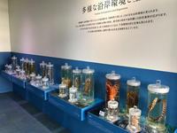 「くらやみの覇者」展ふじのくに地球環境史ミュージアム豊かな海1/3 - ブリキの箱