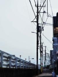 それでも、散歩は続く…(*^。^*) - のーんびり hachisu 日記