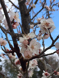 小さな春がチラホラと・・ - 布の花~花びらの行方 Ⅱ