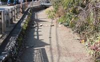 矢川の水が干上がっている! - 多摩の中ほど