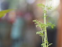 にんじんの葉 - 静かに過ごす部屋