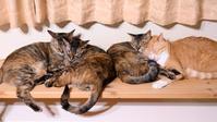 2×2×2 - 猫と夕焼け