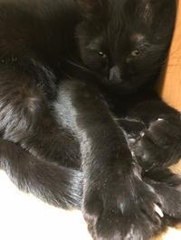 柿くん重たい - 愛犬家の猫日記