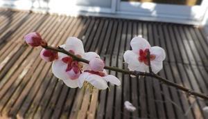 ありがたき春の音 -