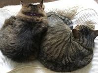 猫と血圧 - いととはり
