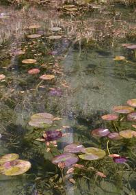 湧水の池 - 高原に行きたい