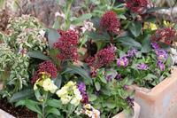 寄せ植えとマイガーデンのクリスマスローズ - 季節の風を追いかけて