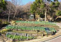 春に向けて準備中♪ - 神戸布引ハーブ園 ハーブガイド ハーブ花ごよみ