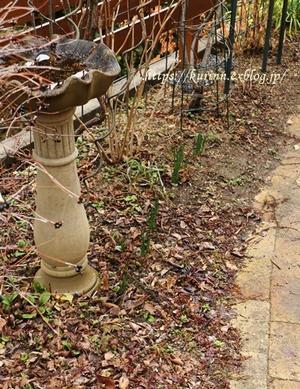 早春~目覚めだした雨上りの庭 - miyorinの秘密のお庭
