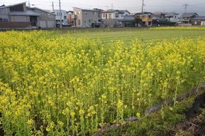 2月20日(wed) 曇り / 春一番が..? - ぐみのき山のうた