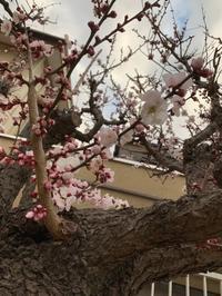 春が来た - Brixton Naoki`s blog