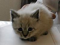 もうすぐ19歳になる猫と初めて出会った時 - 夢風 御朱印日記