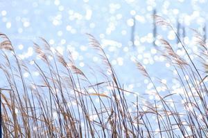 群馬 5年ぶりにハクチョウの飛来地へ ~多々良沼公園~ - 日々の贈り物(私の宇都宮生活)