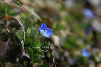 小さい春、み~つけた♪ - FUNKY'S BLUE SKY