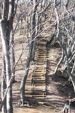 七沢森林公園でウォーキング - coco photo diary